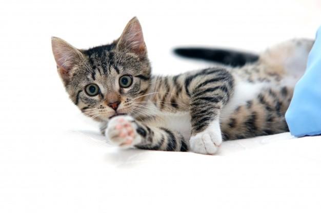 5 nguyên nhân nên mua đồ chơi cho mèo