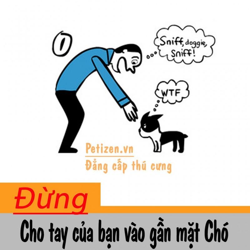 cách tiếp cận chú chó