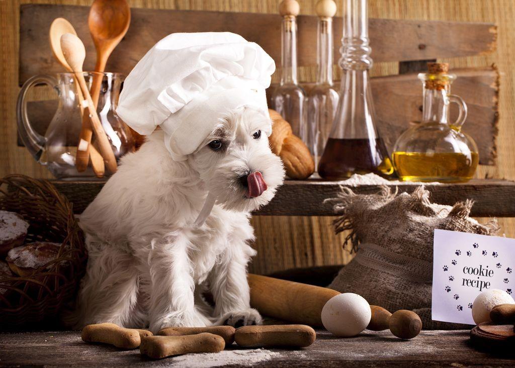tỷ lệ đạm rau củ chất béo cho Chó