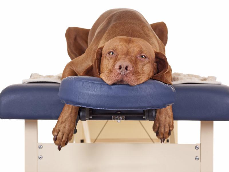 5 lý do bạn nên thường xuyên massage cho Chó Mèo