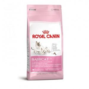 thức ăn hạt khô cho mèo royal canin