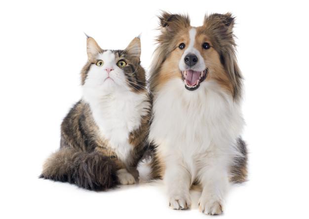 Về việc có được nuôi chó mèo trong chung cư