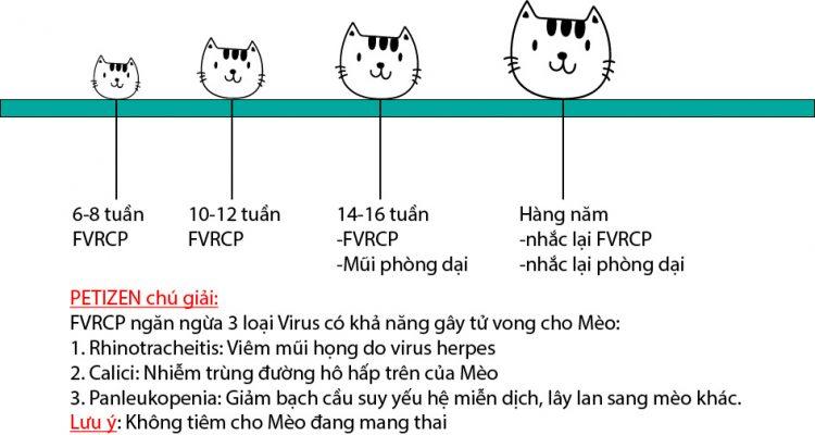 Lịch tiêm phòng cho Mèo