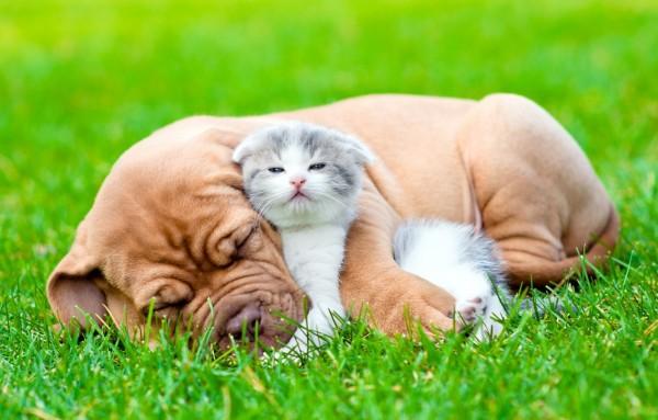 Mèo con dễ chăm sóc hơn