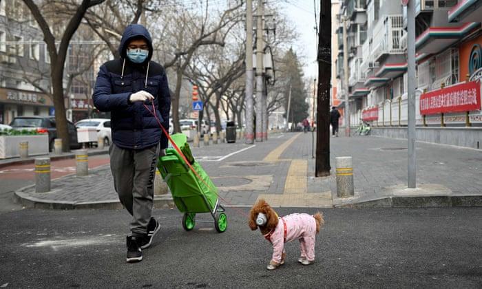 Hướng dẫn phòng chống corona cho thú cưng