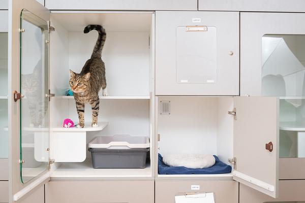 Khách sạn cho Mèo