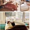 Ô tô đồ chơi cho mèo