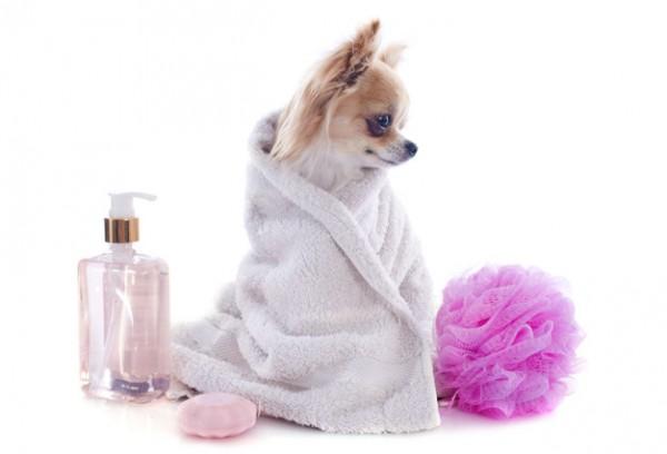 tắm vệ sinh chó