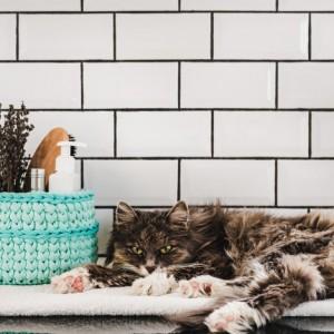 Tắm vệ sinh cắt tỉa lông Mèo 4-6kg