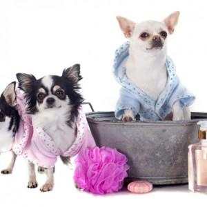 Tắm vệ sinh cho Chó 2-4kg