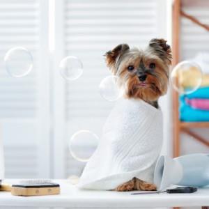 Tắm vệ sinh chó 2-4kg