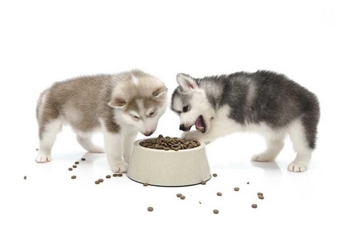 Thức ăn cho chó con