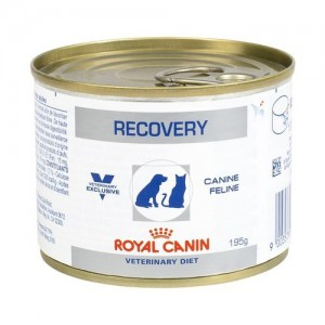 Pate hồi phục Royal Canin Recovery