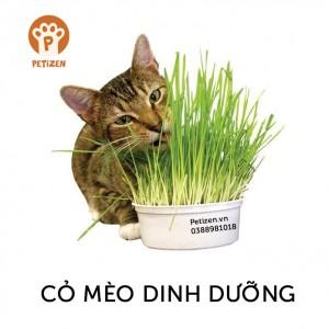 cỏ dinh dưỡng cho mèo