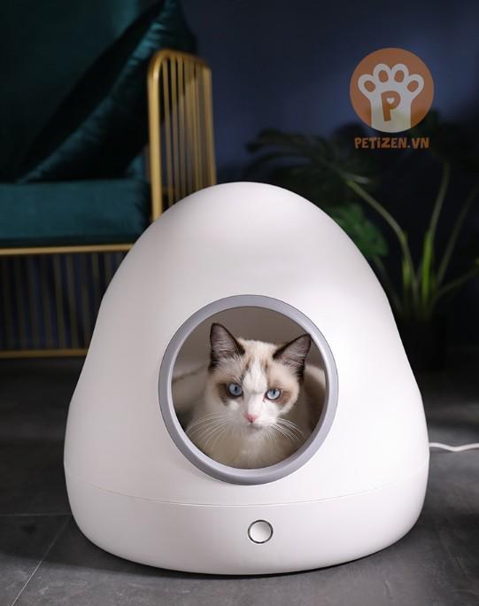 nha thông minh cho mèo