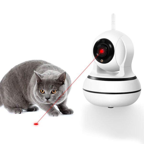 Camera giám sát mèo