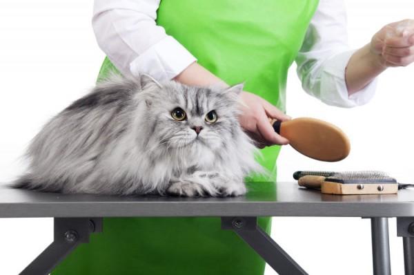cắt tỉa lông mèo
