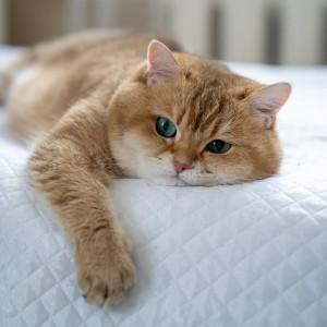khách sạn cho mèo lớn