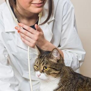 Thuốc men cho Mèo