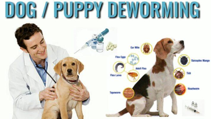 lịch tẩy giun cho chó