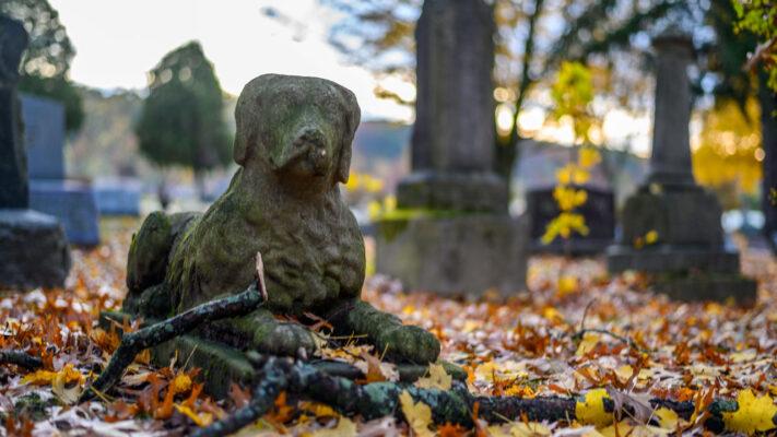 Nghĩa trang thú cưng