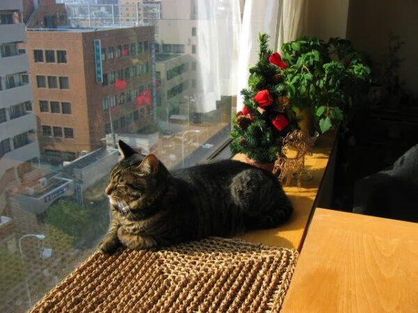 Nên nuôi chó hay mèo ở chung cư