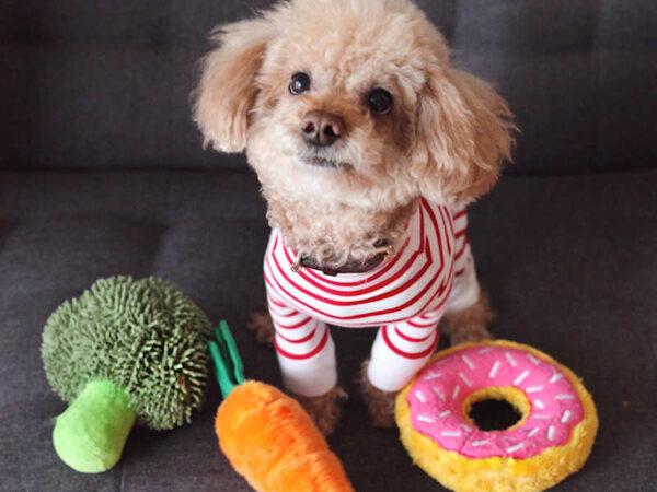 Đồ chơi cho chó dạng bông vải